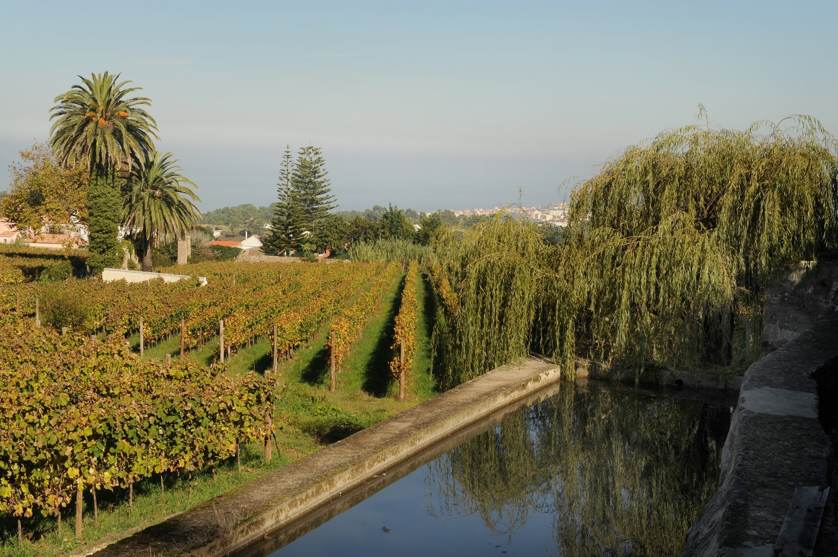 The Salty Wine, the Victorian Garden and the Fish