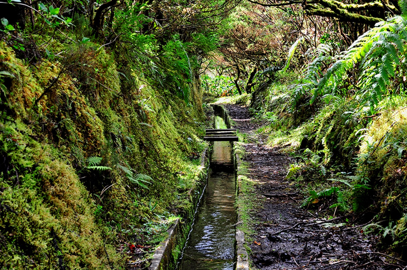 Walk in Azores